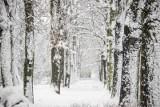 Śnieg - Krosno