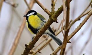 Czy znasz te ptaki i umiesz je nazwać? Rozwiąż quiz