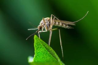 Tych owadów kiedyś u nas nie było. Czy i jak nam zagrażają?