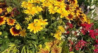 Domowe sposoby na piękne rośliny. Potrafisz z nich korzystać? Sprawdź