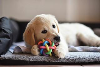 Planujesz adoptować zwierzątko domowe? Sprawdź, czy to dobry moment!