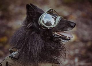 Ares – pierwszy pies w WOT. Ten pies ratuje ludzkie życie!