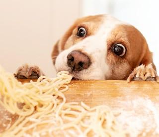 Czy twój pies może to zjeść? QUIZ