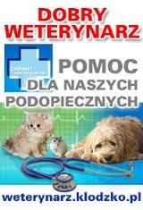 Logo firmy GABINET WETERYNARYJNY lek. wet. Dariusz Jaroszewski, specjalista chorób psów i kotów