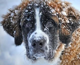 Czy znasz przysłowia na temat zimy? QUIZ