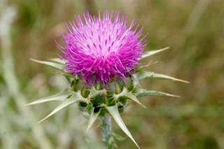 Czy rozpoznasz pożyteczne zioła?