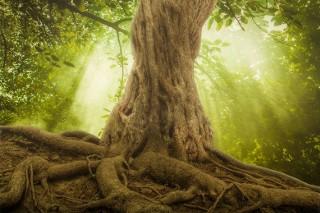 Tego nie wiedziałeś o drzewach. Mają nawet swój internet!