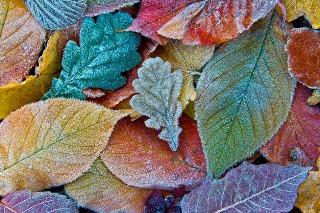Gdy za oknem plucha... Rozwiąż QUIZ o jesiennych przysłowiach!