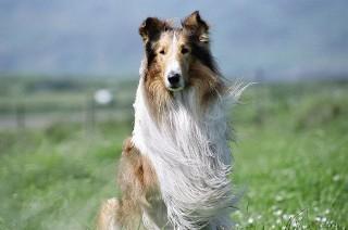 Czy pamiętasz, jak nazywały się te słynne psy? QUIZ