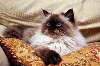 Test wiedzy o kotach. Tylko dla prawdziwych kociarzy!