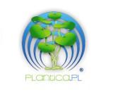 Logo firmy Sklep akwarystyczny Plantica