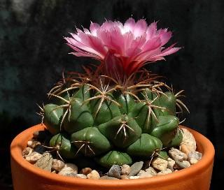 Czy rozpoznasz roślinę doniczkową?