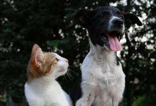 Czym można się zarazić od psa i kota?