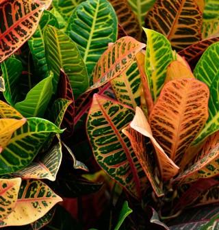 Czy rozpoznasz roślinę po jej liściach i kwiatach?