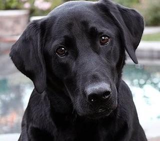 Czy rozpoznajesz rasy psów?