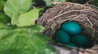 Czy wiesz, co się wykluje z tego jajka?