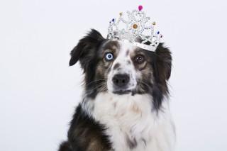 Jaki pies jest dla ciebie najodpowiedniejszy?