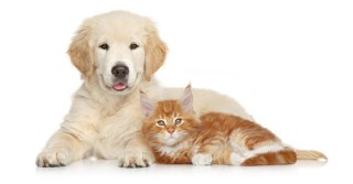 Twój pies lub kot może zostać gwiazdą kalendarza na 2021 rok