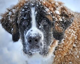 Czy znasz powiedzenia i mądrości ludowe na temat zimy?