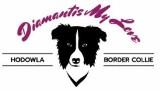 Logo firmy Amigos Positive Dog Training